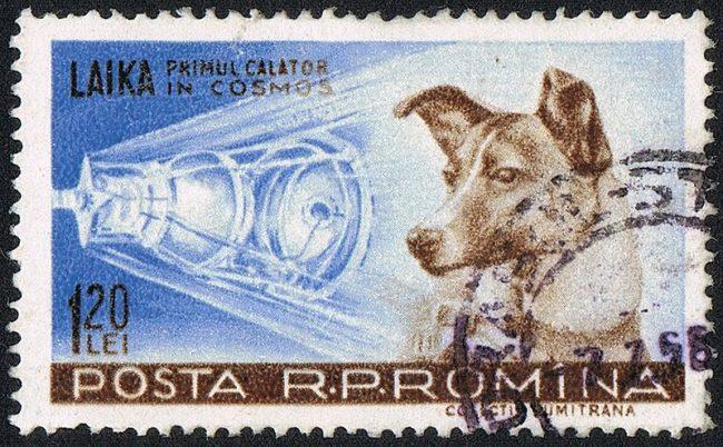 Briefmarke der rümanischen Post zu Laikas Raumfahrt 1957 (gemeinfrei)